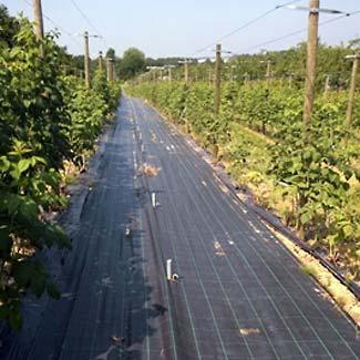 Bodenschutzgewebe von Glaeser Grow