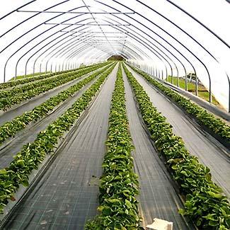 Bodengewebe von Glaeser Grow