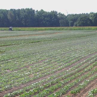 Wetter- und Vogelschutznetz von Glaeser Grow