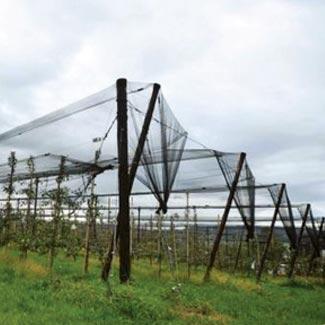 Hagelschutznetz von Glaeser Grow