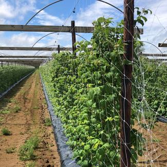 Schattiernetz von Glaeser Grow